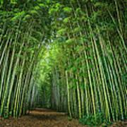 Path Through Bamboo Forest E139 Art Print