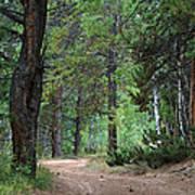 Path Through The Pines - Casper Mountain - Casper Wyoming Art Print