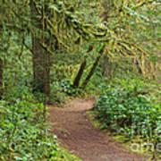 Path Through The Rainforest Art Print