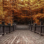 Path To The Wild Wood Art Print by Scott Norris