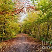 Pathway Through Sunlit Autumn Woodland Trees Art Print by Natalie Kinnear