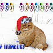 Paw Humbug Art Print by Robyn Stacey