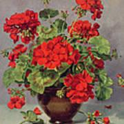 Geranium In An Earthenware Vase Art Print