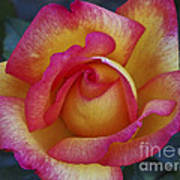 Peace In Floral Format Art Print