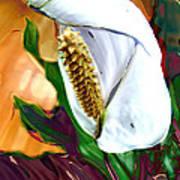 Peace Lily 2 Art Print
