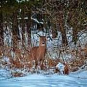 Peace Valley Park Deer Art Print