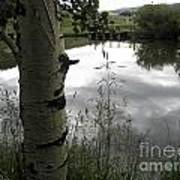 Peaceful Aspen With Pond And Clouds Art Print