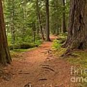 Peaceful Path To Cheakamus Lake Art Print
