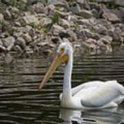 Peaceful Pelican Art Print
