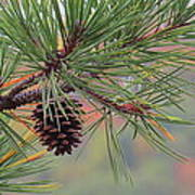 Peaceful Pinecone Art Print by Stephen Melcher