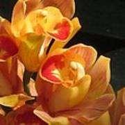 Peach Cymbidium Orchid Art Print