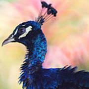 Peacock And Pink Art Print by DerekTXFactor Creative