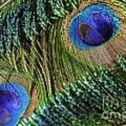 Peacock Eye And Sword Art Print