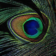 Peacock Eye Art Print