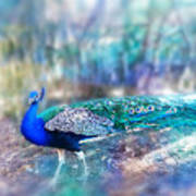 Peacock In The Mist Art Print
