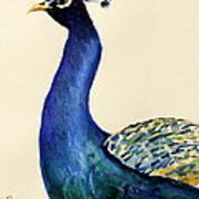 Peacock Portait Art Print by Prashant Shah