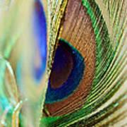 Peacocks Dance The Samba Art Print