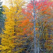 Peak And Past Foliage Art Print