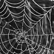 Pearl Web Art Print
