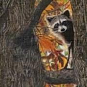 Peeking Bandit Art Print