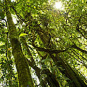Peeking In Costa Rica Rain Forest Art Print