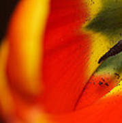 Peering Into The Heart Of A Tulip Art Print