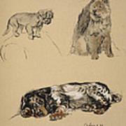 Pekinese, Chow And Spaniel, 1930 Art Print