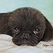 Buddy The Pekingese Art Print