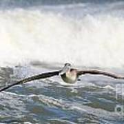 Pelican 4057 Art Print