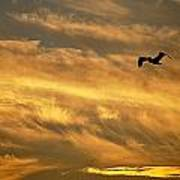Pelican Against The Golden Sky Art Print