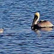 Pelican And Gull Art Print