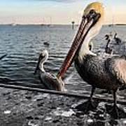 Pelican At The Pier Art Print