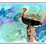 Pelican Colours Art Print