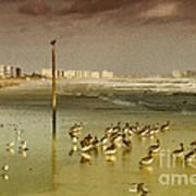 Pelican Haven Art Print