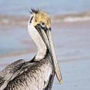 Pelican In Need Art Print