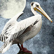 Pelican Night Art Print