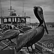 Pelican On Pier Art Print