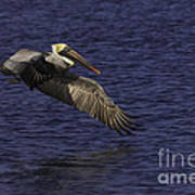 Pelican Over Water Art Print
