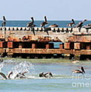 Pelican Pier Art Print