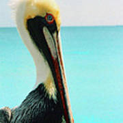 Pelican Profile And Water Art Print