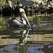 Pelican Reflected Art Print