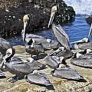 Pelican Rock Art Print