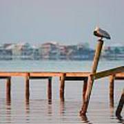 Pelican Sleeping On Sound At Angle Art Print