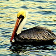 Pelican Waters Art Print by Karen Wiles