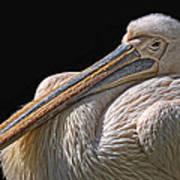 Pelicano Art Print