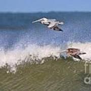Pelicans 3870 Art Print