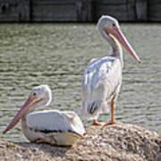 Pelicans By The Pair Art Print