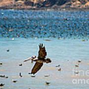 Pelicans Flocking On The Ocean Art Print