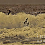 Pelicans In The Surf Art Print