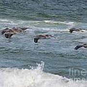Pelicans Over The Water Art Print